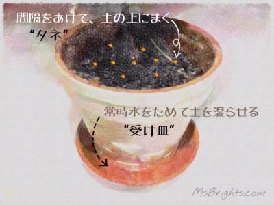 Shiso Leaves 2015-0